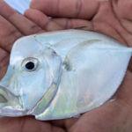 peche-poisson-costa-rica-20