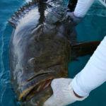 peche-poisson-costa-rica-32