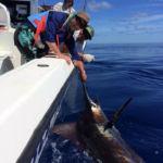 peche-poisson-costa-rica-46